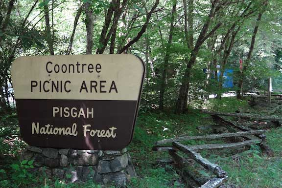 Coontree Picnic area5