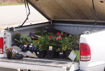 Truck-filled-with-plants
