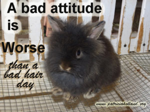 a bad attitude is worse than a bad hare day