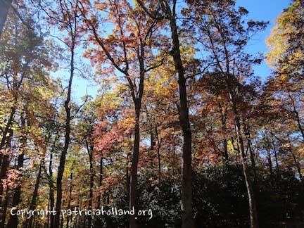 fall-light-through-trees
