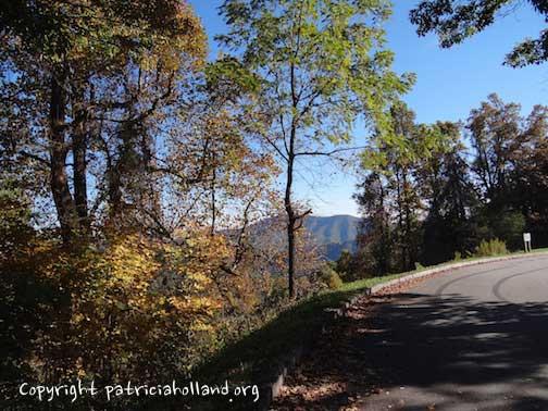 fall-mountain-trees