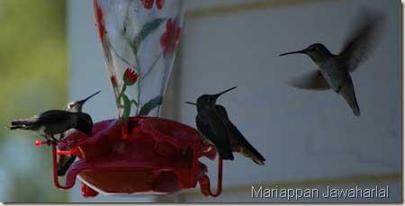 Sweet Little Hummingbirds