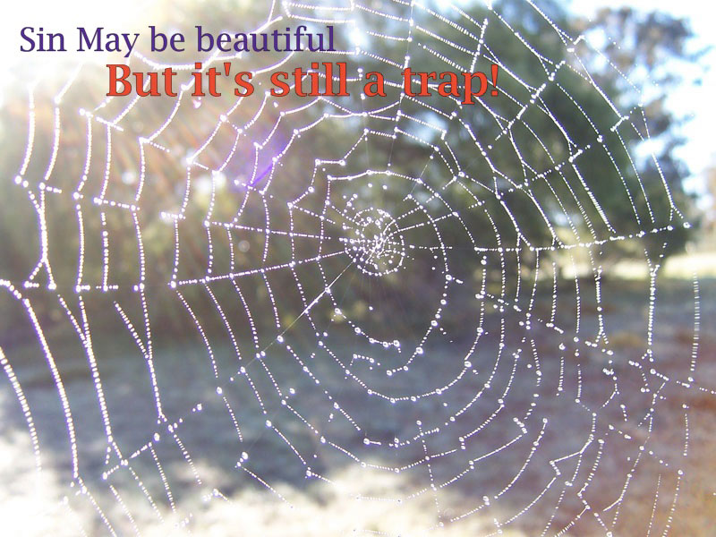 spider_web_sin-may-be-beautiful