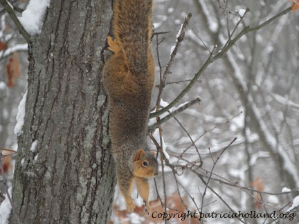squirrel-snowy-tree