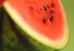 Watermelon Lickers or Watermelon Eaters